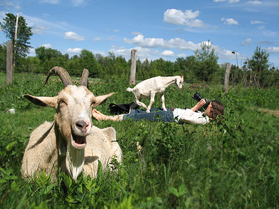 Goats of Summer