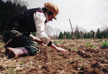 Sherry planting carrots