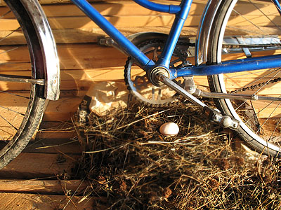 bicycle egg